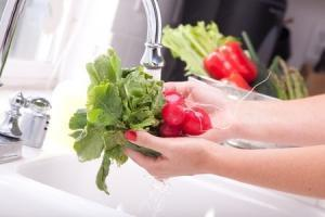 Washing radishes in the kitchen sink.